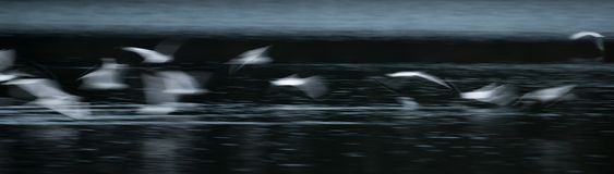 Flying Seagull Abstract Royalty Free Stock Images