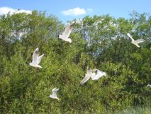 Seagulls in flying. Beach in summer time. stock image