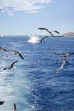 Seagulls flying and big ship Stock Photography