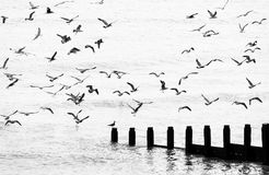 Seagulls flying Royalty Free Stock Photos
