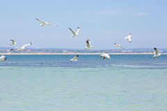 Seagulls flying in blue sky over the ocean Royalty Free Stock Photos