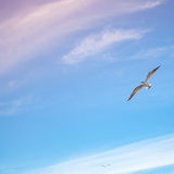 Seagulls flying on bright cloudy sky background Royalty Free Stock Photos