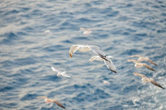 Seagulls flying close to ferry in Greece Royalty Free Stock Image