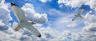 Seagulls flying on a cloudy blue sky Royalty Free Stock Image
