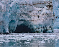 Seagulls flying into ice caves Margerie Glacier Stock Photos