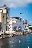 Seagulls flying in Ischia island Stock Photography