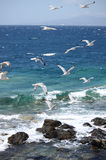 Seagulls flying Royalty Free Stock Photo