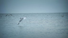 Seagulls flying midair stock video footage