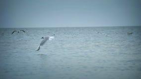 Seagulls flying midair stock video footage