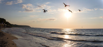 Seagulls flying over the Baltic sea before sunset. Royalty Free Stock Photos
