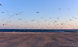 Seagulls Flying Over the Beach Stock Images