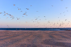 Seagulls Flying Over the Beach Royalty Free Stock Photo