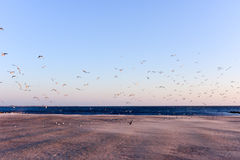 Seagulls Flying Over the Beach Royalty Free Stock Images