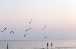 Seagulls flying over the beach Stock Image