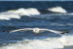 Seagulls flying over blue sea 1 Royalty Free Stock Images