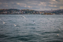 Seagulls flying over the Bosphorus channel, Istanbul, Turkey. Stock Images