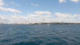Seagulls flying over the bosphorus sea, against the istanbul cityscape, Turkey stock video