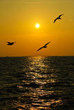 Seagulls flying over the coast. Royalty Free Stock Photo