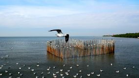 Seagulls Flying Over and Floating on the Sea, Standing on Heart Shape Bamboo Sticks Stock Photo