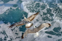 Seagulls flying. Summer seascape Royalty Free Stock Images