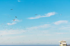 Seagulls flying over a lifeguard hut in La Jolla beach Royalty Free Stock Photography