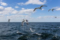 Seagulls Flying over the Ocean during Daytime Stock Photos