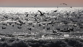 Seagulls flying over the ocean Stock Photography