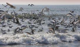 Seagulls flying over the ocean Stock Photos