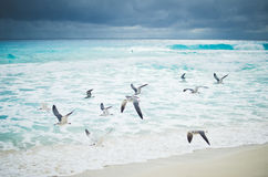 Seagulls flying over ocean waves. Seagulls flying over turquoise ocean water, with waves and dark stormy sky in the background. Cancun, Mexico Royalty Free Stock Image