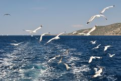 Seagulls flying over sea behind the ship Stock Images