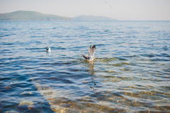 Seagulls flying over the sea Royalty Free Stock Photos