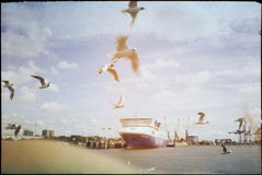 Seagulls flying over sea Stock Image