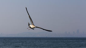 Seagulls flying over the sea Royalty Free Stock Photography