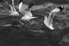 Seagulls flying over sea Stock Photos
