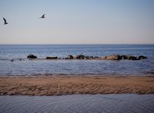 Seagulls are flying over the sea water. Seagulls are flying over the sea stock image