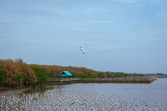 Seagulls flying over or soaring over the sea in Bangpu Samut Prakan Stock Photography