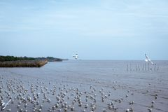 Seagulls flying over or soaring over the sea in Bangpu Samut Prakan Stock Photos