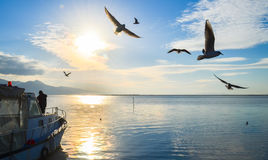Seagulls flying over sunny, blue, cloudy sky. There is a fishing boat on the sea. Stock Images