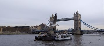 The seagulls flying over the tower bridge royalty free stock images