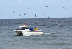 Seagulls flying round a fishing boat. Royalty Free Stock Images