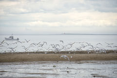 Seagulls while flying Royalty Free Stock Images