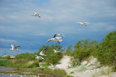 Seagulls flying at the sea Royalty Free Stock Photography