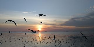 Seagulls are flying. In the yellow sunset sky, Bangpu Thailand Royalty Free Stock Photography