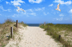 Seagulls flying in sky at beach Stock Photo