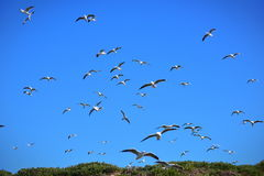 Seagulls flying in the sky Stock Image
