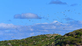 Seagulls flying in the sky Stock Photography