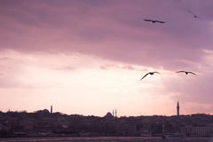 Seagulls flying in sky  in Istanbul Stock Images