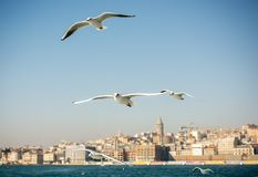 Seagulls are  flying in a sky. Seagulls are  flying in sky as a background Stock Image