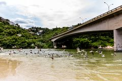 Seagulls flying underneath bridge in the point where the sea meets the Marapendi Lagoon, in Barra da Tijuca, Rio de Janeiro.  stock photography