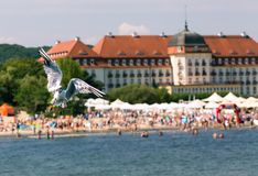 Seagulls flyingon molo w Sopocie, Polska zdjęcia stock